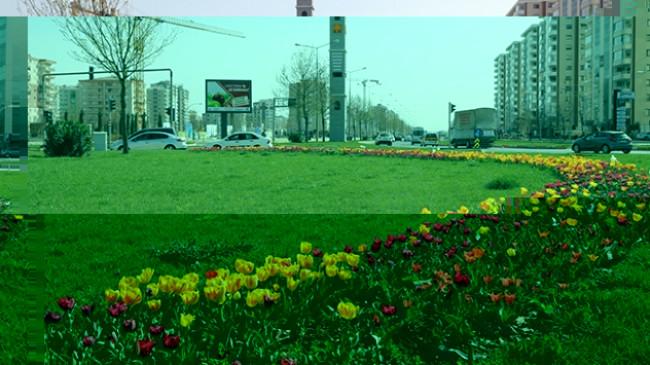 Diyarbakır'da milyonlarca çiçek dikiliyor