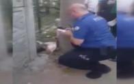 Sakarya'da iki bacağı kesilmiş kedi bulundu