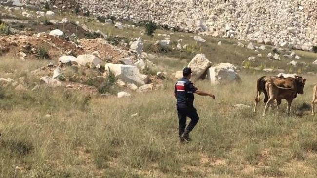 """Burdur'da kayıp hayvanlar """"drone"""" desteğiyle bulundu"""